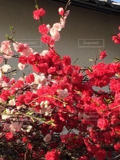 お花畑の写真・画像素材[116024]