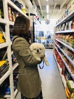 犬と海外のペットショップの写真・画像素材[3358776]