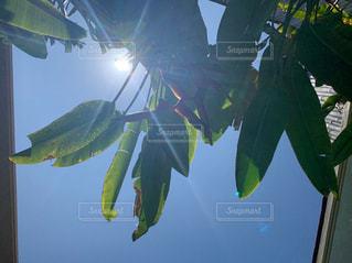 晴天の空の写真・画像素材[2785005]
