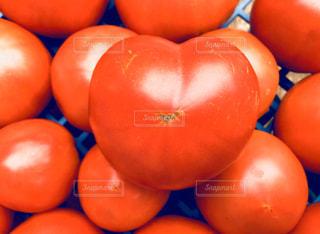 新鮮採れたてトマトの写真・画像素材[2787231]