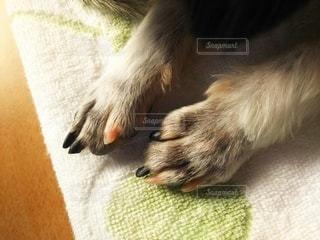 横たわっている犬のクローズアップの写真・画像素材[2788508]