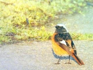 見返り美人な小鳥の写真・画像素材[3067351]