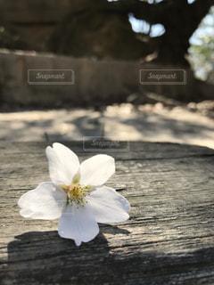 春の写真・画像素材[417216]