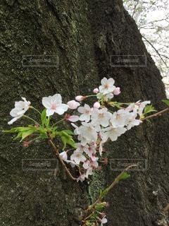 お花畑の写真・画像素材[109414]