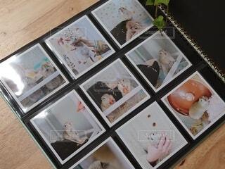 ペットのアルバムの写真・画像素材[3869590]