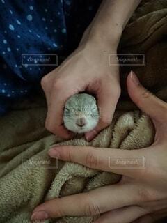 撫でられてうっとりしているリスの写真・画像素材[4230117]