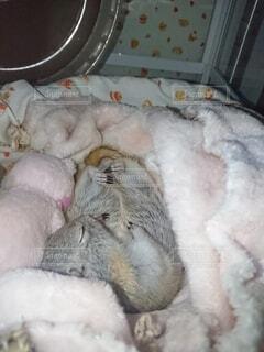 寝ているリスの写真・画像素材[4230125]