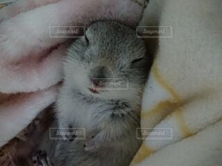 寝ているリスの写真・画像素材[4230131]