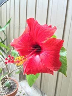 花の写真・画像素材[107820]