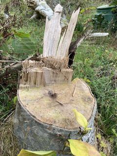 木の上に座っている鳥の写真・画像素材[2794087]