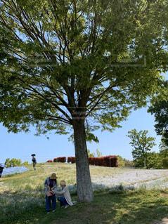 大きな木の下で休憩の写真・画像素材[2803389]