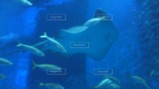 青魚とエイの写真・画像素材[2810487]