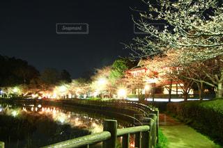 夜にライトアップされた湖周辺での桜祭りの写真・画像素材[2856367]
