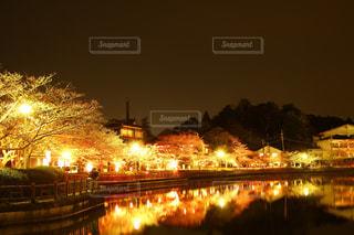 桜祭りでの夜景の写真・画像素材[2856368]