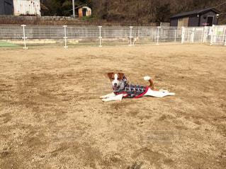 犬 - No.130429