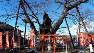 今宮神社の写真・画像素材[2800556]
