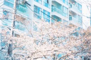 住宅と桜の写真・画像素材[2801348]
