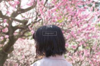 桜に囲まれる女の写真・画像素材[2801434]