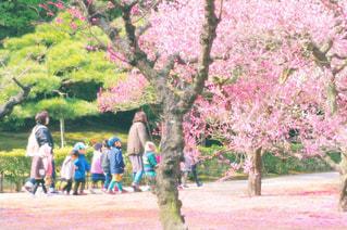 桜の咲いた公園を散歩する子どもたちの写真・画像素材[2801439]