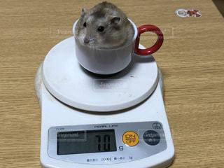 肥満気味のハムちゃんティーカップに入ってますの写真・画像素材[2804563]