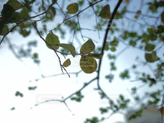 ひとつの葉っぱにピントの写真・画像素材[2807936]