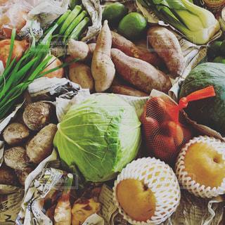 美味しい野菜果物  夏〜秋の写真・画像素材[2814542]