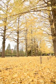 秋の終わりの写真・画像素材[2808706]
