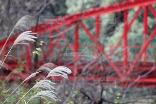 すすきと赤い橋の写真・画像素材[2993021]
