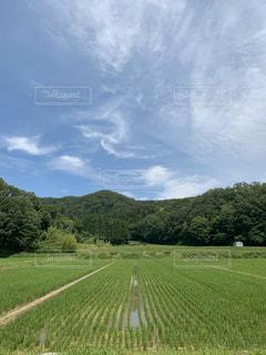 青空に木々と田んぼの写真・画像素材[2888483]