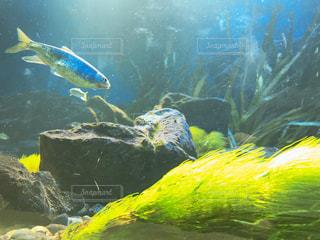 水中に射し込む光の写真・画像素材[2817764]