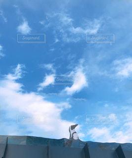青空とペンギンの写真・画像素材[2817847]