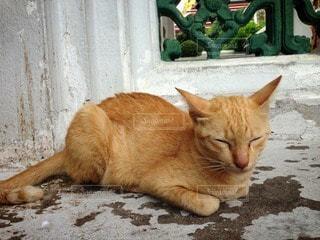 猫の写真・画像素材[122183]