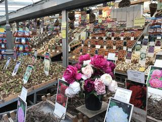 アムステルダムの花市場の写真・画像素材[714131]
