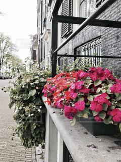 花の街。アムステルダムの写真・画像素材[714133]