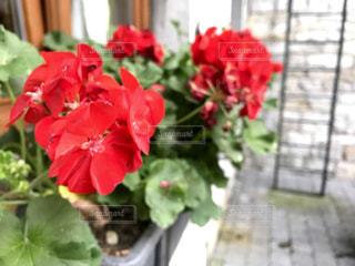 鮮やかな花の写真・画像素材[714289]
