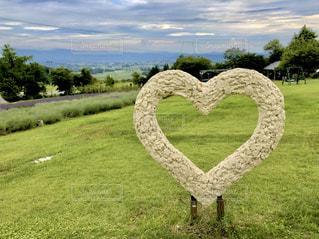 緑豊かな畑のクローズアップの写真・画像素材[2826200]