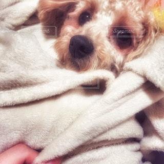 犬の写真・画像素材[108780]