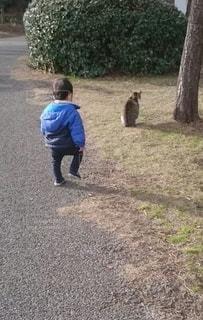 猫を追いかける子供の写真・画像素材[2826765]