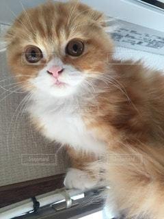 猫の写真・画像素材[109714]