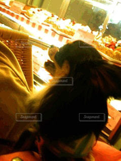犬の写真・画像素材[155141]