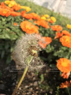 花の写真・画像素材[445766]