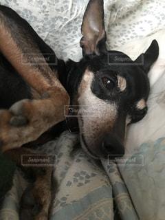 近くにベッドの上で横になっている犬のアップ - No.874481