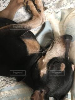 近くにベッドの上で横になっている犬のアップ - No.874482