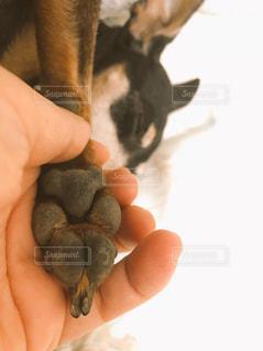 犬を持っている手 - No.874483