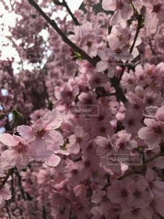 近くの花のアップの写真・画像素材[1079385]