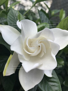 近くの花のアップの写真・画像素材[1263466]