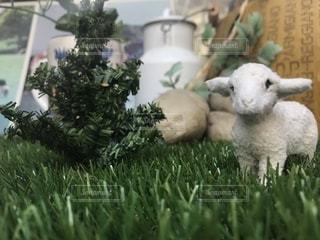 羊草の上に立ってのグループ カバー フィールドの写真・画像素材[1266341]