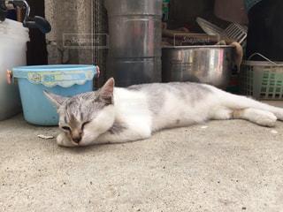 猫の写真・画像素材[358753]