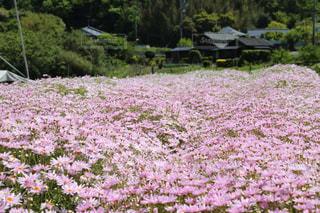 野原の花の写真・画像素材[2839511]