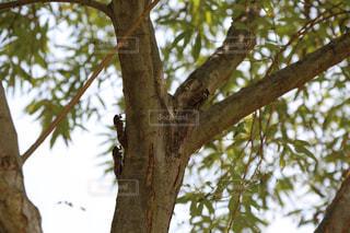 木の枝に止まっているセミの写真・画像素材[2840410]